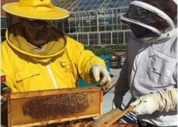 Gonzaga Becomes State's First Certified 'Bee Campus USA'