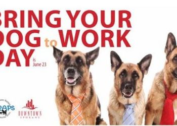 DSP and SCRAPS partner for bring your dog to work day - June 23